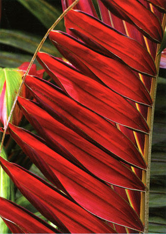 red palm cover